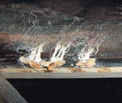 House mold allergens are a huge problem, especially if you allow your basement or crawl space to grow mold and spread.