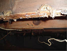 Mold rotting away floor joists