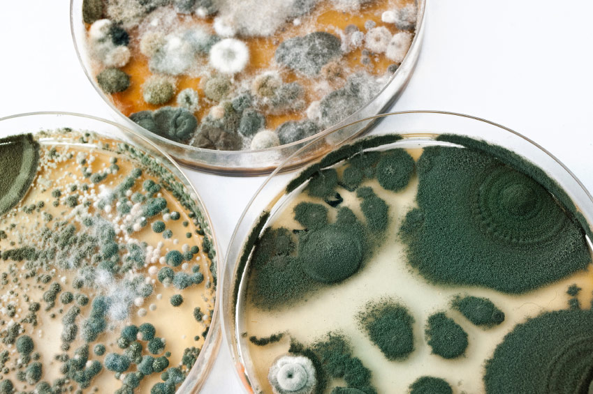 mold spores in basement or crawl space can destroy your health