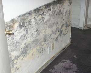 how to fix mold smell from the basement concrete floor